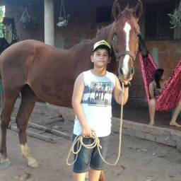 Cavalo quarto de milhar
