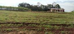 Vendo Terreno em Capanema