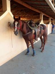 Vendo Cavalo de Team Roping