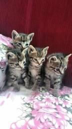 Estou doando esses 4 gatinhos ja comendo racao .988172519 sete Lagoas