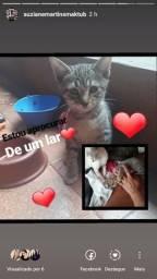 Estou doando essa linda gatinha(sol)