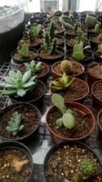 Cactos,suculentas e outras plantas