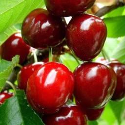 Cereja de Madacascar/ frutas