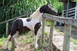 Título do anúncio: Cavalo