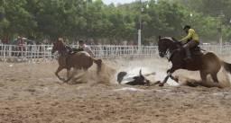 Cavalo de canhota