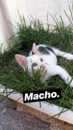 Gatinhos para adoção (2 meses)