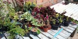 Várias plantas apartir de 1,00