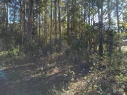Título do anúncio: Area de Terra com reflorestamento