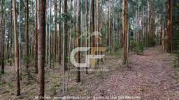 Título do anúncio: Venda de Eucalipto - Campo Belo do Sul / CS