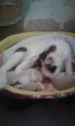 Adoção de gatinhos . ?????