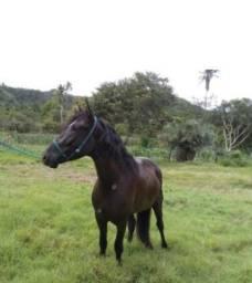 Cavalo mangalarga top (épico do guariroba )