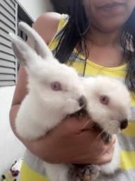 Vendo um casal de coelhinhos 9 reais cada