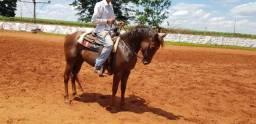 Cavalo PO espetacolar