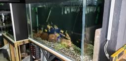 Aquario 350 litros