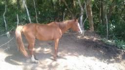 Troco em outro cavalo