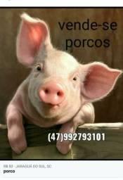 Vendo porcos, interessados
