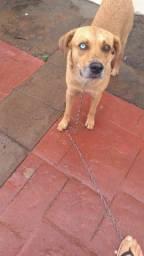 Cãozinho para adoção