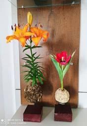 Lindos arranjos de kokedamas Lírio e tulipa já vem com suporte