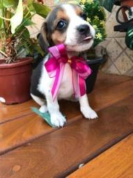 Título do anúncio: Beagle Fêmea Mas Novo Amor