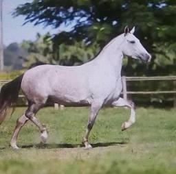 Égua machadeira