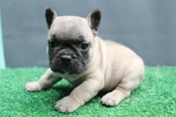 Machinho Top de Bulldog Francês