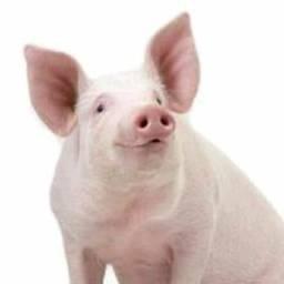 Procuro chiqueiro de porco ou aviario para trabalhar