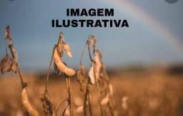 Fazenda de 1600 Hectares no Alto Alegre