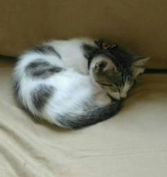 Urgente: Doa-se gatinho branco e tigrado filhote