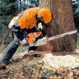 Cortamos árvores em geral