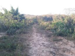 Jazida de Pedra Portuguesa Cinza- Fazenda da Lontra/ Paraopeba