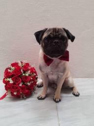 Procuro uma Namorada (Pug)