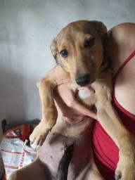 Doação responsável cadela vacinada!