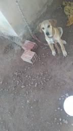 Estou doando 2 cachorro vira lata mestiço