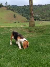 Beagle Mine /
