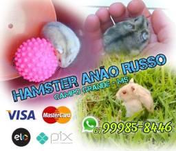 Título do anúncio: Filhotes de Hamster de raça, Anão Russo