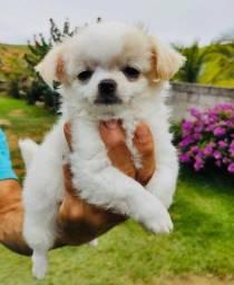 Título do anúncio: Menor Cachorro do Mundo
