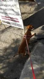 Cachorrinha para doar