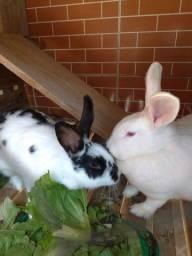 Coelhas mãe e filha