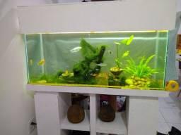 Lindo aquário completo