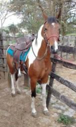 Título do anúncio: Cavalo Pampa