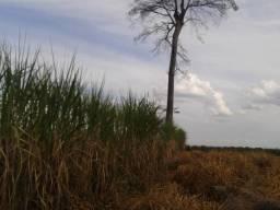11.500 Hectares, Pecuária, 4800 há pastagens, estruturada, Mato Grosso