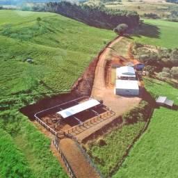 Linda Fazenda 51 Alqueires Próximo a Cascavel Paraná (Pastagem)