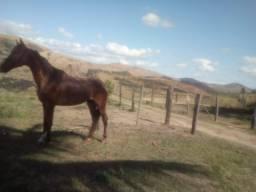 Vendo cavalo castrado chipado no controle