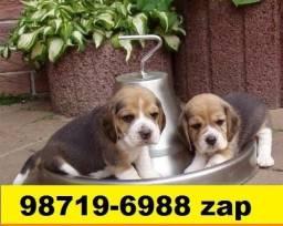 Canil Filhotes Cães Selecionados BH Beagle Yorkshire Maltês Lhasa Poodle Bulldog Shihtzu