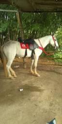 Cavalo MM, marcha picada
