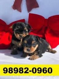 Canil em BH Filhotes Cães Yorkshire Shihtzu Maltês Beagle Basset Lhasa Poodle