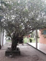 Vendo esse sitio em São Pedro da aldeia RJ