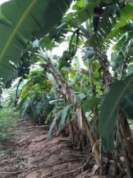Fazenda 128 Hectares com muita água