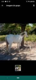 Título do anúncio: Cavalo de esteira