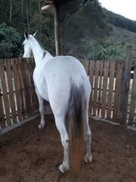 Égua mangalarga sem registro top
